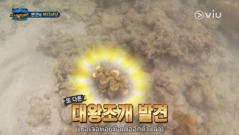 SBS  Law of the Jungle รายการ เกาหลี จับหอยมือเสือ