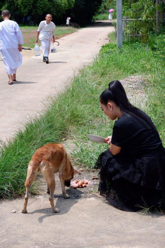 หญิง ธิติกานต์ ความรัก หมาแมว หมาจร