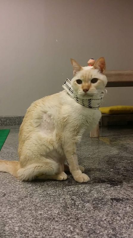 จั๊กจั่น อคัมย์สิริ กบ เสาวนิตย์ เลือดแมว