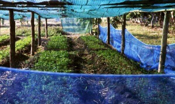 เบิร์ด ธงไชย แบบวิถีเกษตรกร ใช้ชีวิตพอเพียง