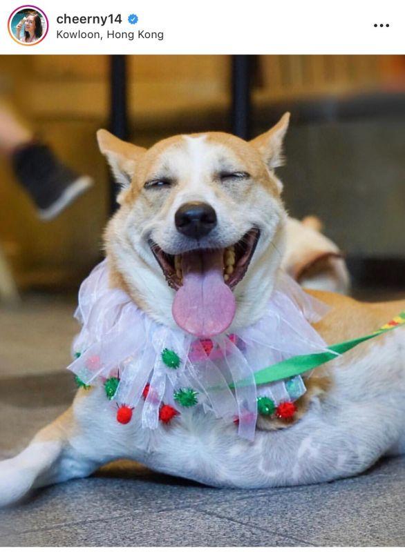 อั้ม แพนเค้ก มิว เชียร์ ญาญ่า มิว สุนัข วันสุนัขโลก