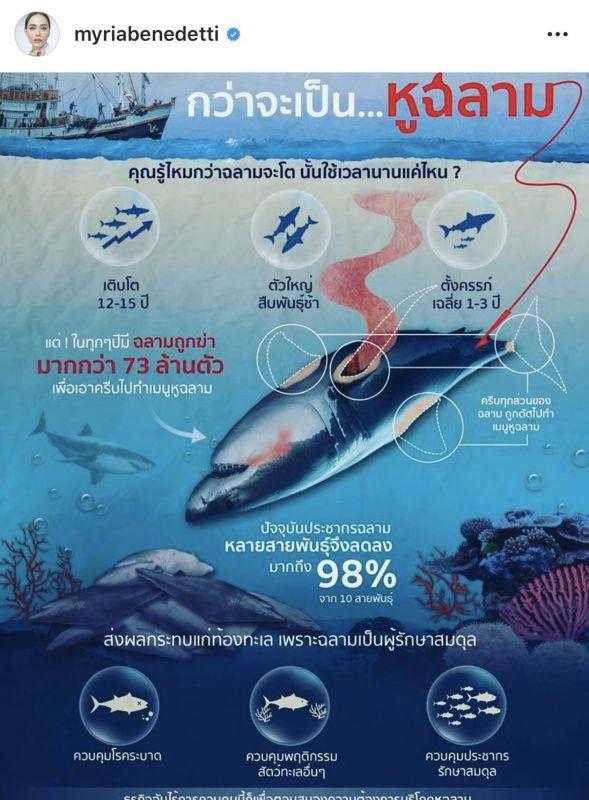 นัท มีเรีย ดราม่า ต่อต้าน รัฐบาล เลิกกิน ฉลาม