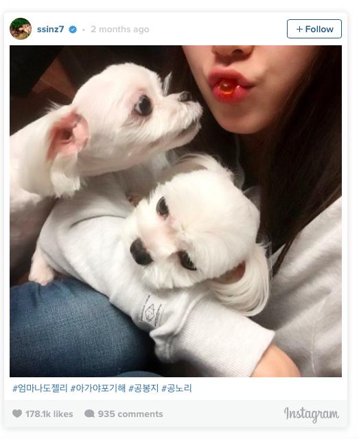 ไอดอลเกาหลี บันเทิงเกาหลี สัตว์เลี้ยงตัวโปรด สัตว์เลี้ยงขนฟู บันเทิง ดารา นักแสดง