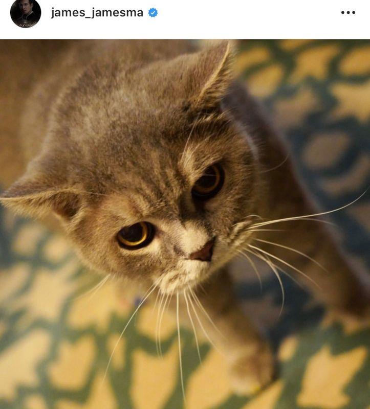 ซุปตาร์ ทาสแมว วันแมวโลก ดารา