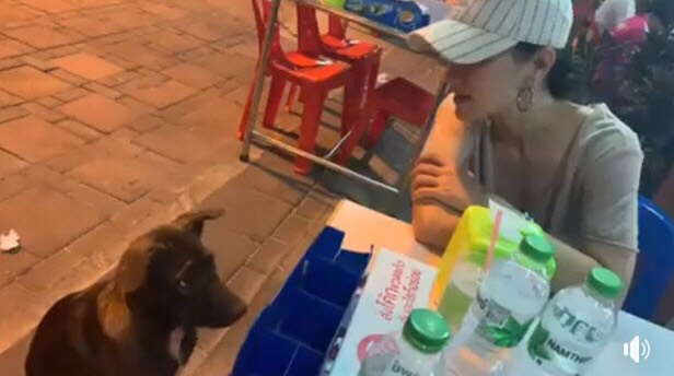 แอน ทองประสม สุนัข รักสัตว์