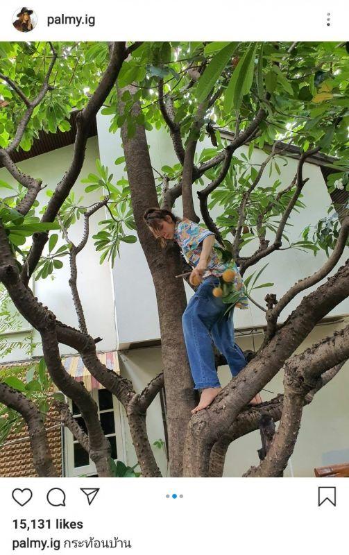 ปาล์มมี่ ปีนต้นไม้ กระท้อน
