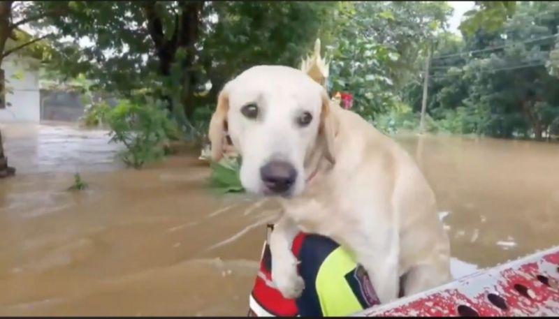 น้ำท่วมโคราช หมา