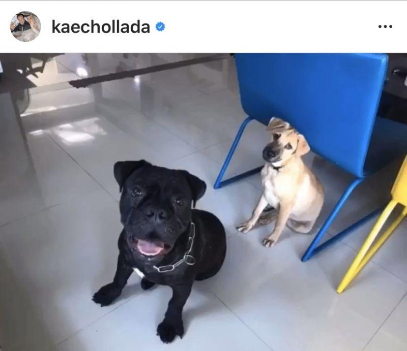 เก๋ ชลลดา ช่วยเหลือ สุนัข นมเย็น