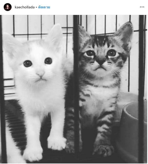 เก๋ ชลดา พรบ. สัตว์ #ฆ่าแมว