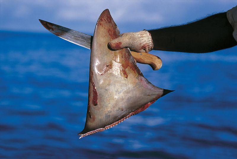 ป้อง ณวัฒน์ คนไทย ฉลาม หูฉลาม