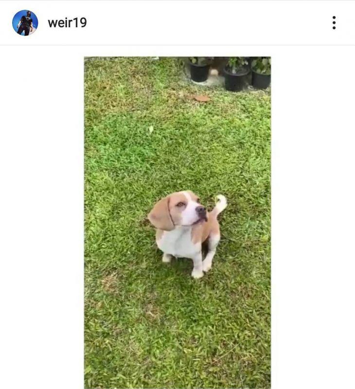 เวียร์ เวย์ สุนัข หมาของเวียร์
